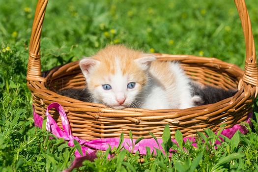 A small red kitten is sitting in a basket