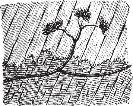 Termination of Medullated Nerve Fibers, vintage illustration