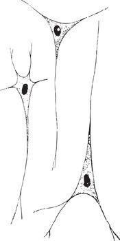 Ganglion Nerve Corpuscles, vintage illustration