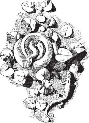 Serpent Cast a form created by both a viper and lizard, vintage
