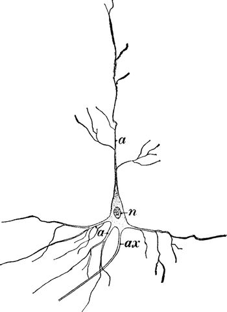 Nerve Cell, vintage illustration.