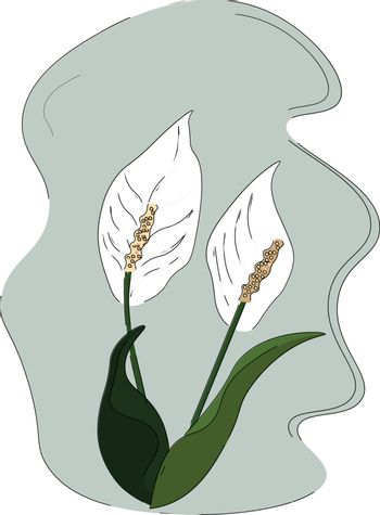 Drawing of the lilies and elongated oval-shaped leaves on their