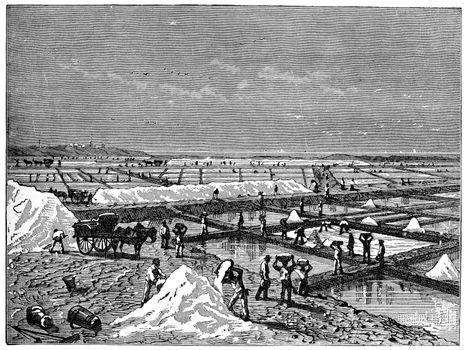 Lifting of salt in a salt marsh edges of the Mediterranean, vint