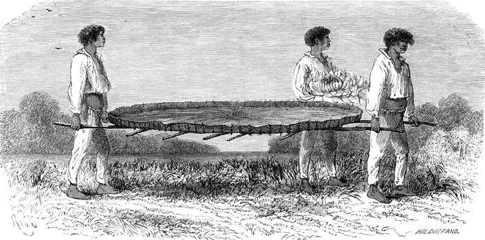 Transporting a sheet of Nymphaea, vintage engraved illustration. Le Tour du Monde, Travel Journal, (1865).