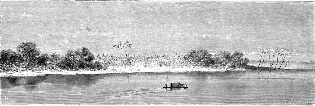 Vegetation in the Ucayali at its mouth, vintage engraved illustration. Le Tour du Monde, Travel Journal, (1865).