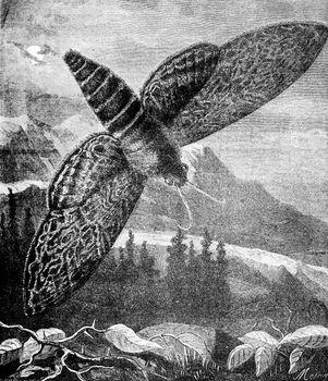 Sphinx, vintage engraving