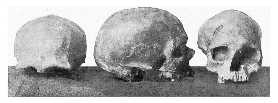 Crumbling skull of Cro magnon in the valley of the Vezere, vintage engraved illustration. From the Universe and Humanity, 1910.