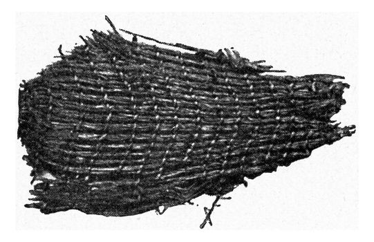 Woven grass cleaved from a stony construction on stilts, vintage engraved illustration. From the Universe and Humanity, 1910.