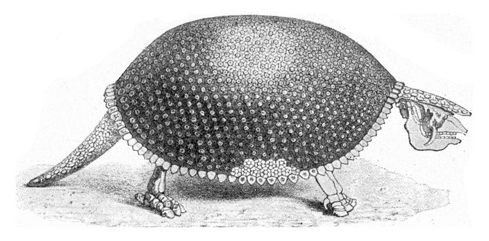 Glyptodon, a fossil armadillo, vintage engraved illustration. From the Universe and Humanity, 1910.