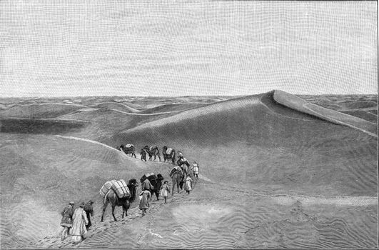 Transport of goods by a camel caravan in a desert of Central Asia, vintage engraved illustration. From the Universe and Humanity, 1910.