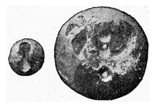 Amber buttons with subcutaneous hole, vintage engraved illustration. From the Universe and Humanity, 1910.