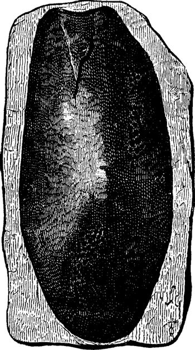 The first fish, Devonian period, Cephalaspis lloydii, vintage en