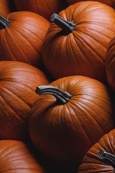 Many orange pumpkins background , Halloween holiday concept