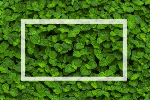 Green bush wallpaper