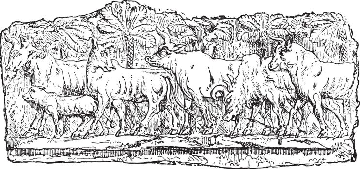 Animals in the market, vintage engraved illustration.
