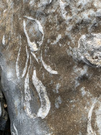 Ancient fossils from the sea exposed on rock