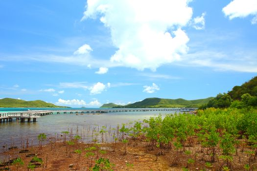 Mangrove Conservation and Ecotourism in Sattahip Chonburi Provin