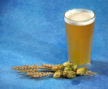 Glass of light wheat beer with foam, hops and ears of corn on a blue background. Close-up.
