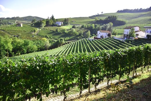 Panorama of Barolo, Langhe, Italy, with vineyards.