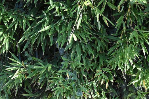 Closeup of bamboo plant