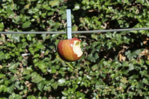 a red bitten apple