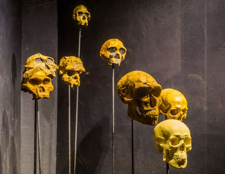 primate and human skulls on stakes, creepy halloween background