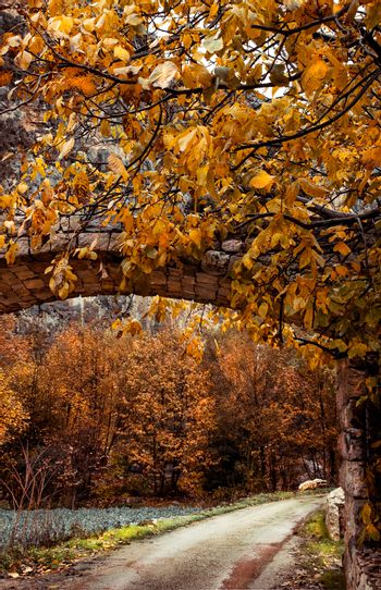 Tunnel over the mountainous road, beautiful trees covered with golden leaves, beauty of autumn season