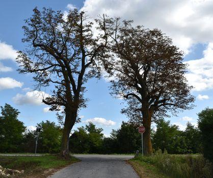 Two simmetrical trees