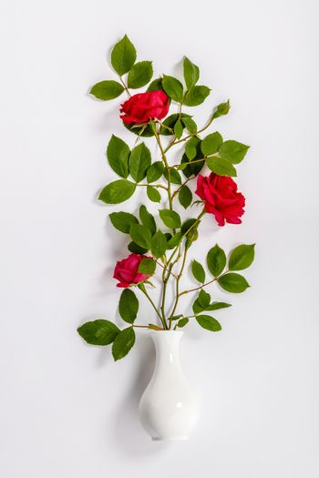 red roses and white vase on white background