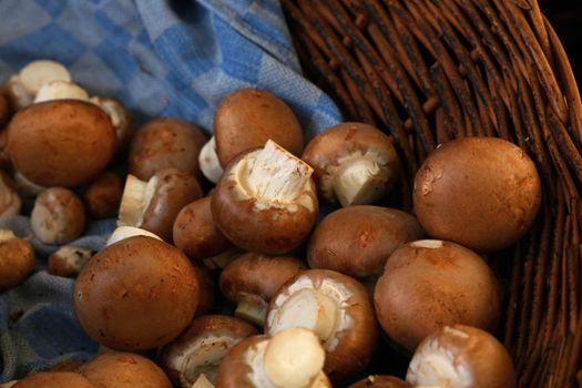 Brown champignon edible mushrooms at retail