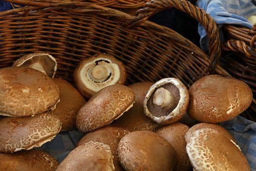 Portobello edible mushrooms at retail display
