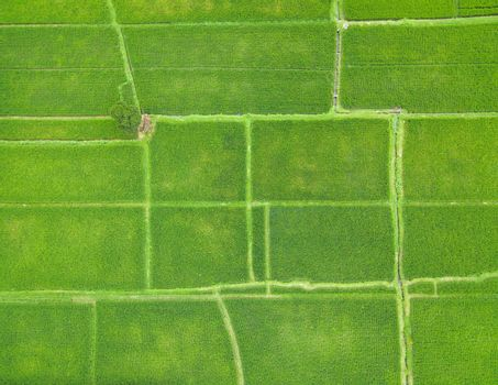 Top down aerial view of rice paddy fields in Bali, Indonesia