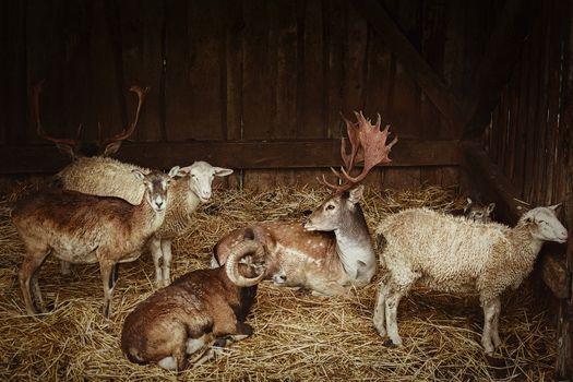 Rural scene - Animals in the barn