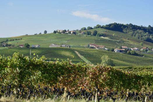 Panorama of Langhe vineyards, famous for Italian wine production in Piedmont.