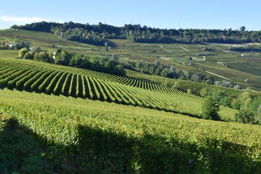 Langhe vineyards panorama, famous for Italian wine production in Piedmont.