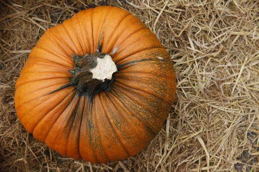 Fair of a pumpkins in California