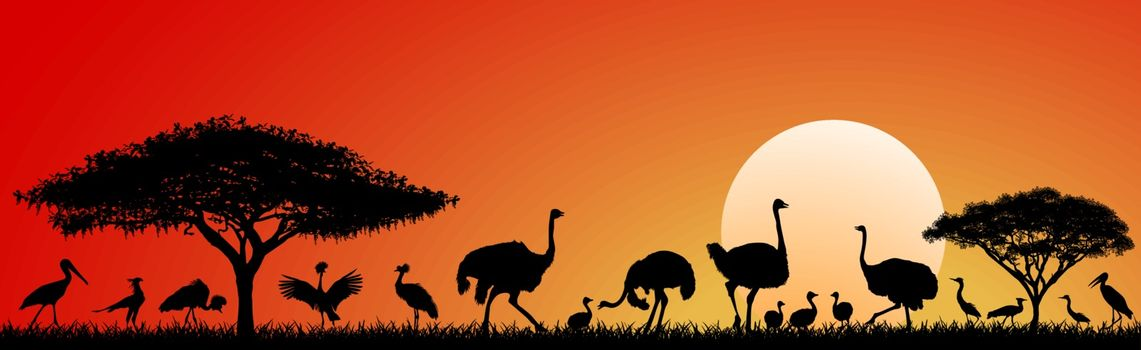 Wild birds of the African savannah against the sky and the sun. Silhouettes of different birds. Wildlife of Africa. Sunset in the savannah.