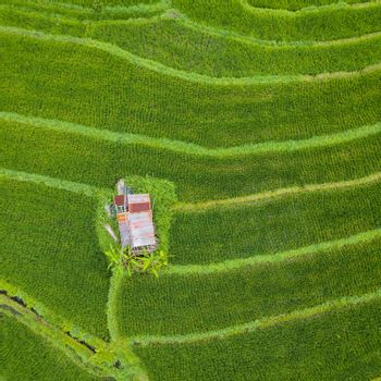 Small hut with rusty tin roof in the middle of paddy fields top down aerial view, In Bali, Indonesia