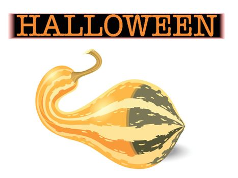 Halloween pumpkin. Elongated striped gourd isolated on white background. Vector illustration.