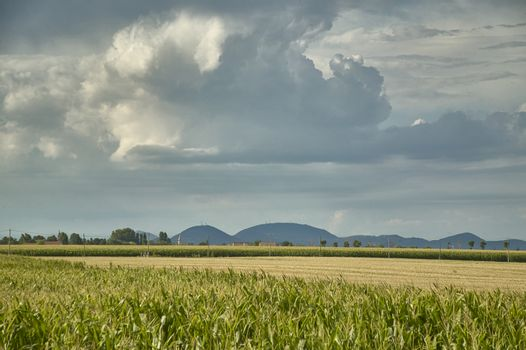 Corn field with background of a thunderstorm and some hills, example of rural landscape of the Rovigo areas in Italy.