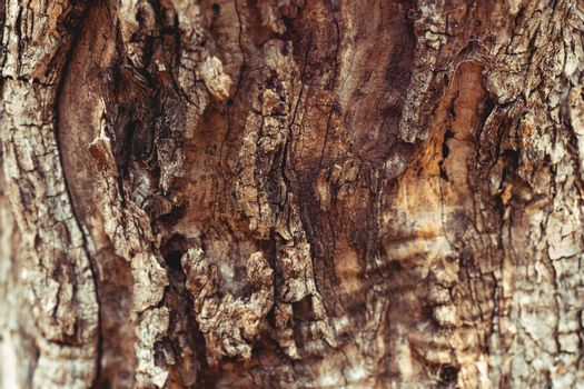 Old tree trunk background