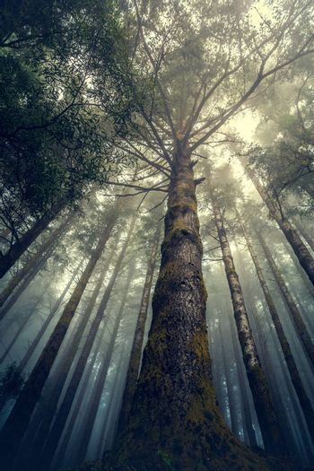 Beautiful forest landscape from Madeira Island, Portugal
