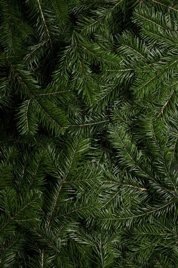 Background of green fir branches for Christmas New Year celebration greeting card design