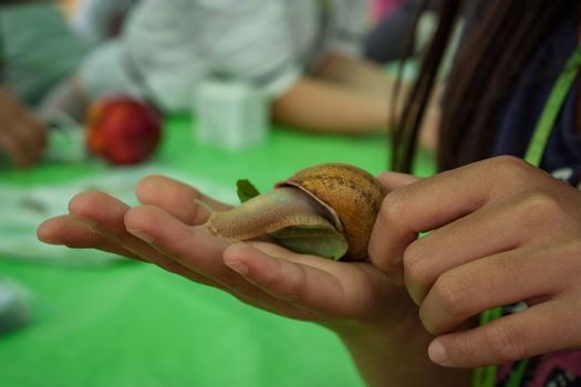 A snail in the hand