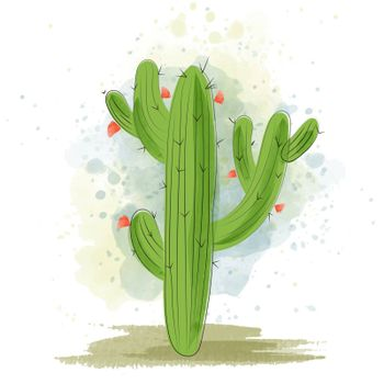 Watercolor cactus blooming. Succulent plant.