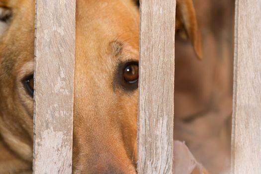 dog victim of animal abuse and mistreatment