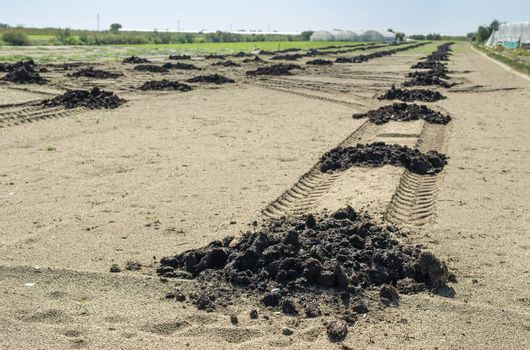 Natural fertilizer in agricultural land scattered on piles. Soil fertilization concept. Farmland and manure. Bio and ecological soild concept. Helthy growing concept with natural fertilizer.