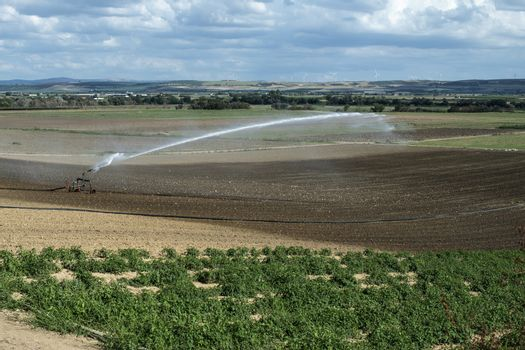 Watering green plants and plowed soil. Panoramic image. Newly planted agriculture land. Big industrial sprinkler irrigation.