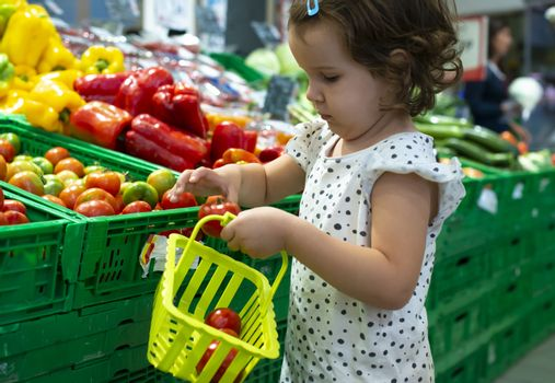 Little girl buying tomatoes in supermarket. Child hold small basket in supermarket and select vegetables. Concept for healthy eating for children.