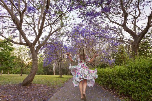 Walking among the rows of purple Jacaranda trees